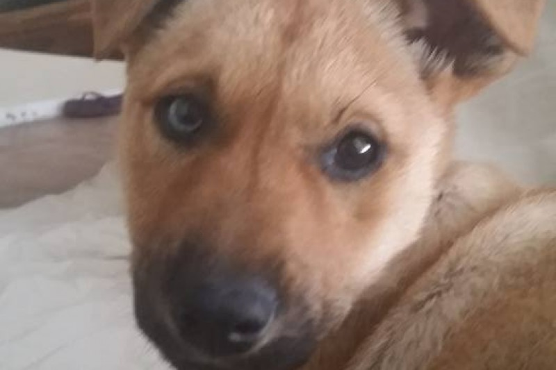 Huricane Matthew Dogs To Be Rescued